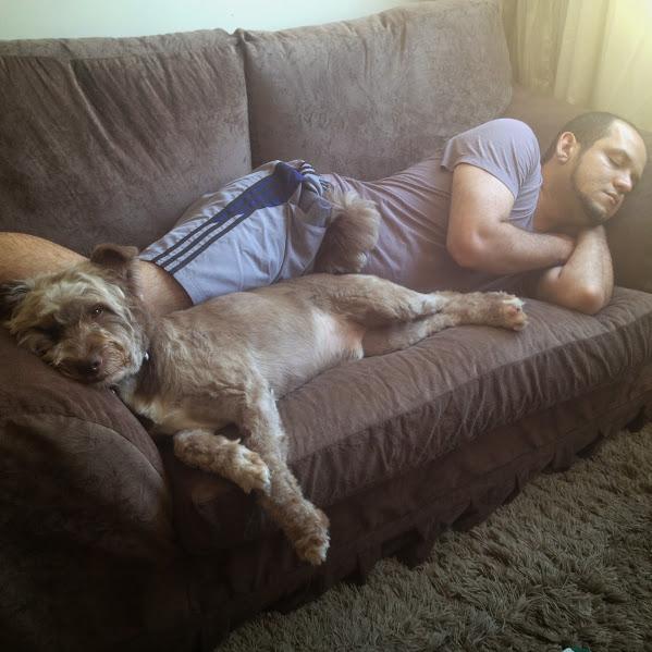 Cachorro dorme ao lado do dono